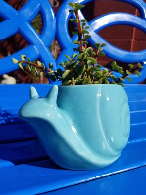 Adorable real snail planter with real succulents for Sale in Gilbert, AZ