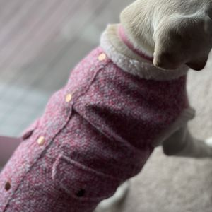 Dog Sweater for Sale in Peoria Heights, IL
