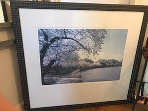 Dc Cherry Blossoms @ Tidal Basin photo w/ Elegant Studded Frame for Sale in Silver Spring, MD