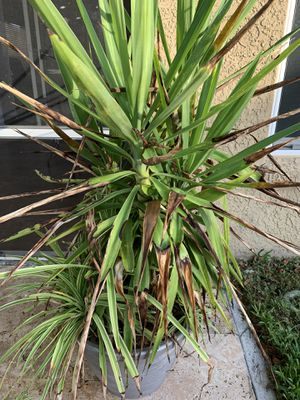 Plants for Sale in Riverview, FL