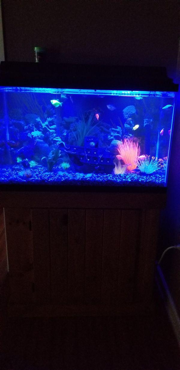 38 gallon Fish tank with extra stuff
