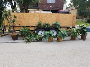 Fake household plants for Sale in Cedar Park, TX