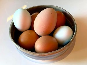 Fresh eggs cage from free chickens one dozen for Sale in Westerville, OH