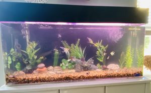 55 gallon aquarium for Sale in Traverse City, MI
