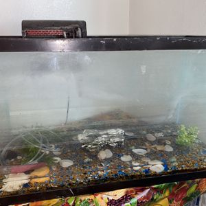 30 Gallon Fish Tank with lots of Accessories for Sale in Bell Gardens, CA