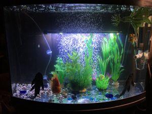 54 gal aquarium with 1000 Pentecostal penn canister filtration for Sale in San Bernardino, CA