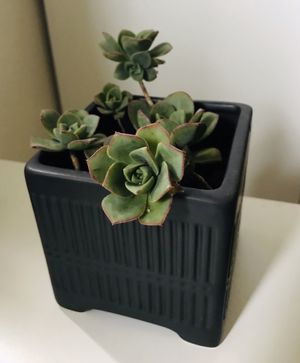 Cute ceramic planter with succulents for Sale in Foster City, CA