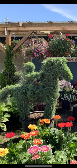 Topiary Trees (horse and rider) for Sale in Troutdale, OR