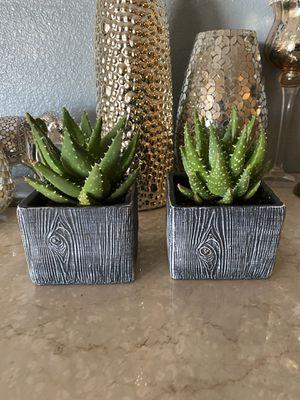 Live Succulent w/Wood Grain Pot for Sale in Las Vegas, NV