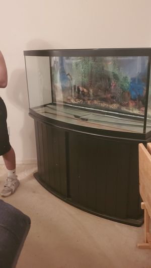 Big tank paid about 700 sell for 350 or bo for Sale in Hudson, FL