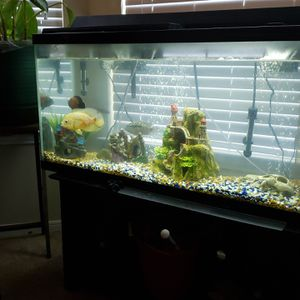 55 gallon fish tank with 2 filters, 2 heaters, decorations, air pump, cleaning supplies and rocks, stand, and hood. BEST OFFER!! MUST PICK UP. for Sale in Nashville, TN