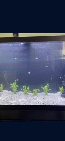 90 Gallon Tank for Sale in Queens,  NY