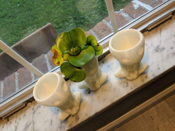 Kodama Succulent Plant Pot Planter from Princess Mononoke one of a kind
