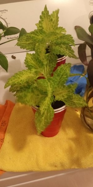 PLANTS PLANTS AND MORE PLANTS for Sale in Portsmouth, VA
