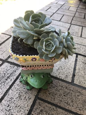 Beautiful Succulent with a Frog's Stan for Sale in Tampa, FL