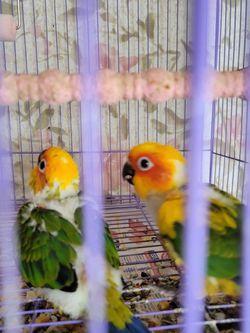 Cage Bird for Sale in Miami,  FL