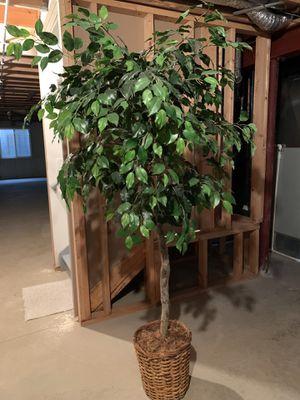 Artificial Ficus Tree for Sale in Vernon Hills, IL