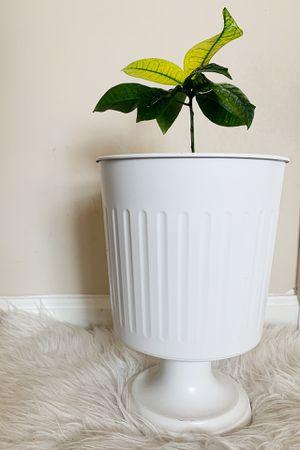 Small plant and pot for Sale in Alexandria, VA