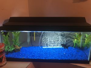 20 gallon with Betta and supplies for Sale in Stonecrest, GA