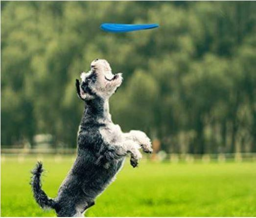Playtime with Your Dog!!