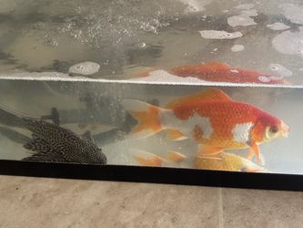 Fish Tank for Sale in Surprise,  AZ