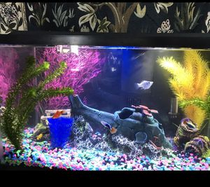 Complete Aquarium Set-up -Accessories Only ( NO tank) for Sale in Watsonville, CA