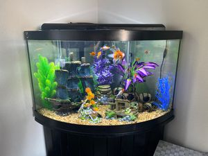 Reptile/Fish Tank Set Up & Maintenance for Sale in Oceanside, CA