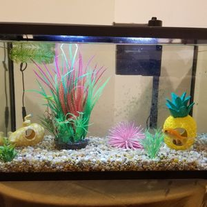 10 Gallon Equorum /fish think all you need is included for Sale in Centreville, VA