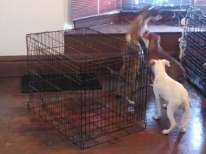 Dog kennels for Sale in Whitehall, OH
