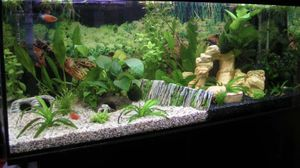 75g gallon aquarium tank and stand for Sale in Richmond, TX