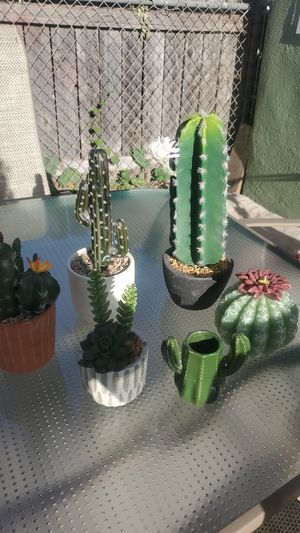 Cactus decor for Sale in Bell Gardens, CA