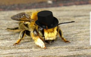 Honey Bee Removal for Sale in Converse, TX