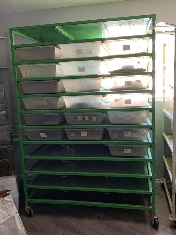 Snake breeding rack