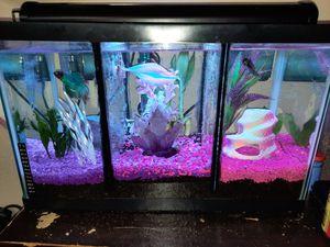 Custom Triple Divided 10 Gallon Aquarium for Sale in Salinas, CA