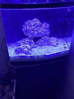 Aquarium 24gal for Sale in Hollywood,  FL