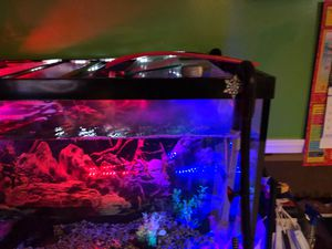 55 gallons fish tanks for Sale in Boston, MA