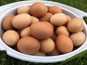 Fresh eggs for Sale in Columbus, OH