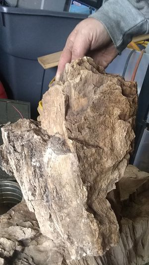 Spfld. Oregon Petrefied wood with crystilization for Sale in Springfield, OR