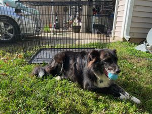 Dog Crate, Pups NOT Included for Sale in Raleigh, NC