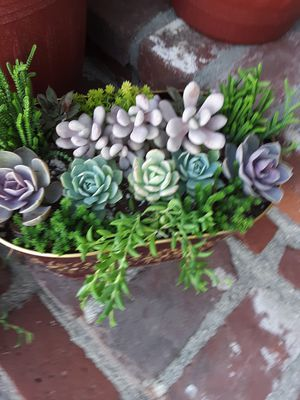 "10"" pot with succulent plants for Sale in La Mirada, CA"