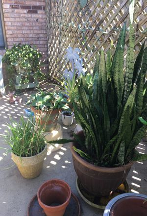 Numerous plants for Sale in Deltona, FL