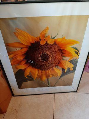 Sunflower picture for Sale in Pine Ridge, FL