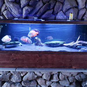 125 Gallon Fish Tank With Everything You Need for Sale in Sykesville, MD