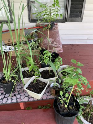 Free plants for Sale in Tampa, FL
