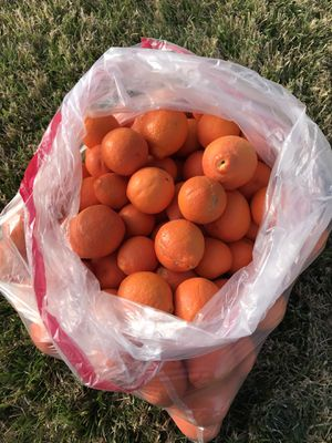 Sweet Tangerines 🍊 20 for $5 for Sale in Lake Elsinore, CA