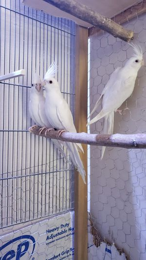 Bird Cage ... for Sale in Keller, TX