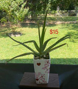 Aloe Vera plant in ceramic vase for Sale in Fort Worth, TX