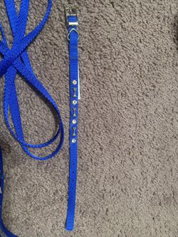 Dog Collar for Sale in Killeen,  TX