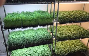 Entire Micro Green Business! for Sale in Running Springs, CA