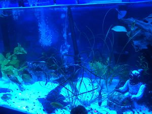 75 gallon fish tank for Sale in Brockton, MA